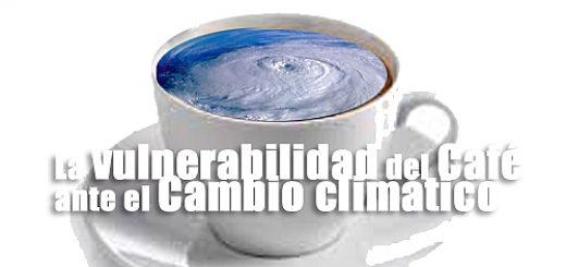 vulnerabilidad Café Cambio climático-cronica urbana