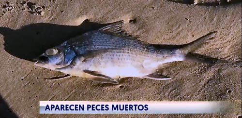 San juan y peces muertos | cronica urbana