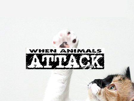 cuando los animales atacan Política en en Puerto Rico