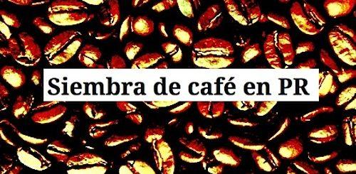 siembra del cafe en puerto rico
